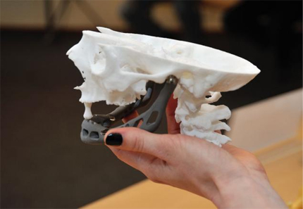 Artificial Jaw with 3d Printing