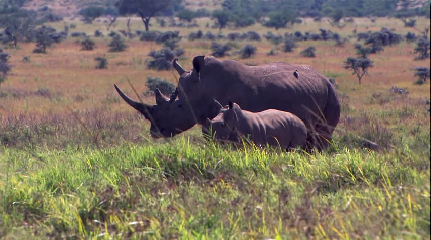 The Humble 3D Printer – An Unexpected Saviour of the Endangered Rhino?