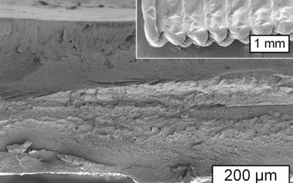 MIT Develops a Method of Cellulose Bioprinting