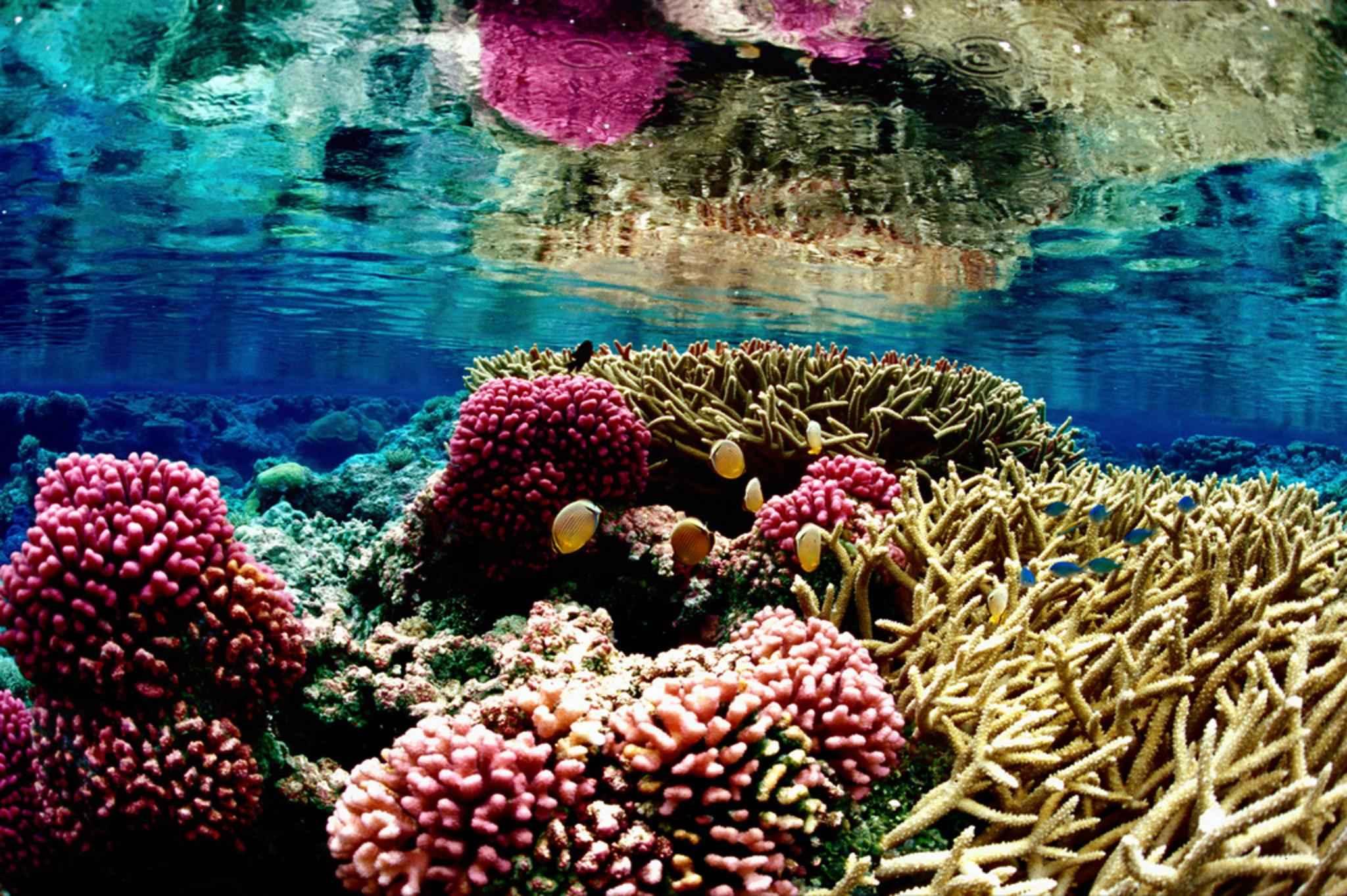 3D Printed Coral Reefs Help Scientists Analyse Environmental Damage