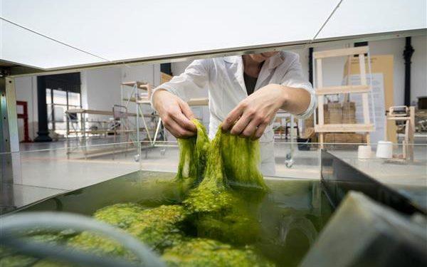 Dutch Designers Create Eco-Friendly Filament Using Dried Algae & Seaweed