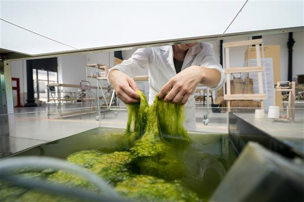 Dutch Designers Create Eco-Friendly Filament Using Dried Algae & Seaweed