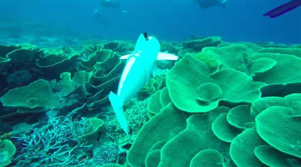 SoFi CSAIL Underwater Soft Robotic Fish