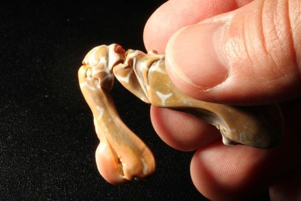 Mantis Shrimp-inspired 3D Printed Bio-mimicry material