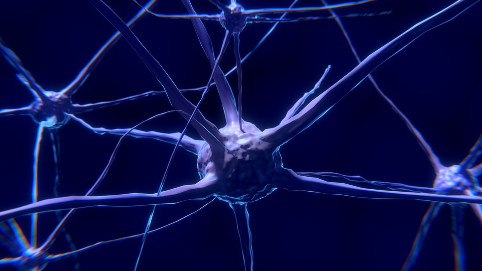 Researchers Boost Nerve Growth With 3D Printed Scaffolds