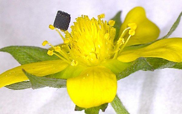 Researchers 3D Print Complex Graphene Structures