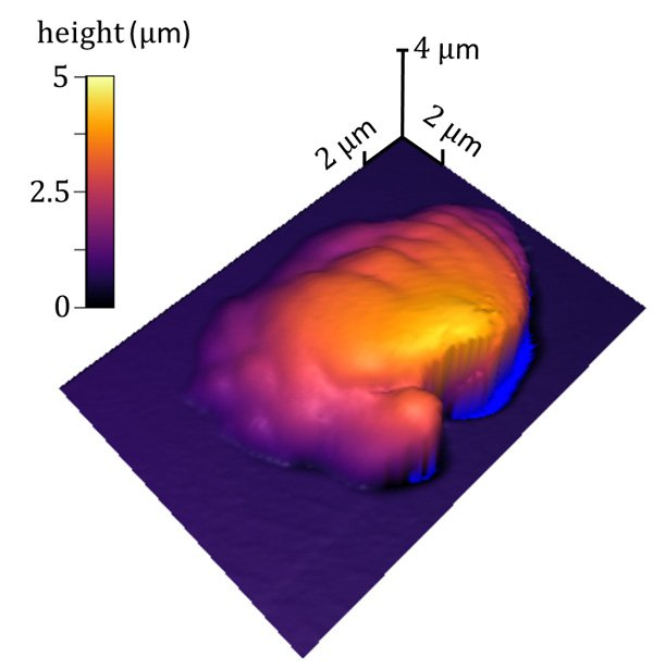 Researchers Analyse Polymers Using Atomic Force Microscopy