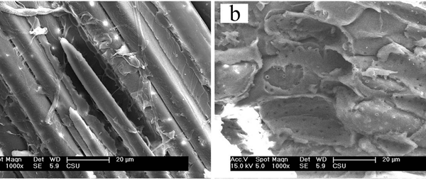 Bamboo Mixtures Improve Polypropylene Filaments