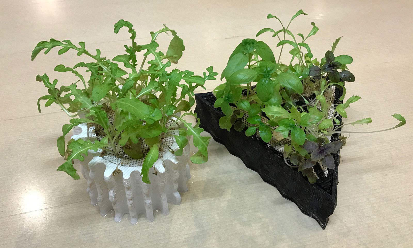 3D Printed Hydroponic Substrates examples