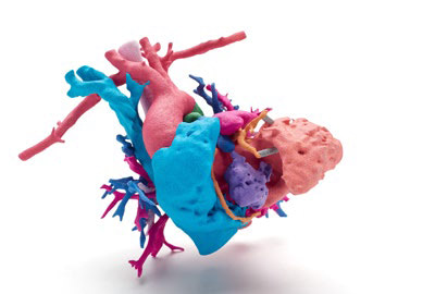 full color anatomical heart 3d printed