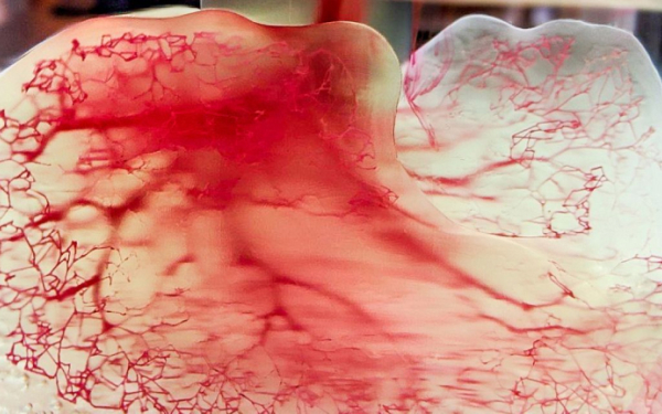 3d printed lungs