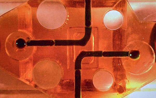 Researchers Grow Brain in 3D Printed Microfluidic Bioreactor
