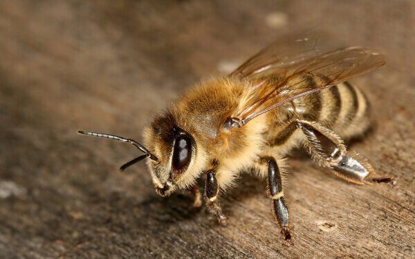 3D Printed Bee Homes to Spur Public Interest in Bees